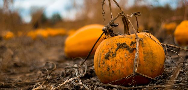 fall-garden-poem