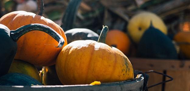 A poem: Fall Garden