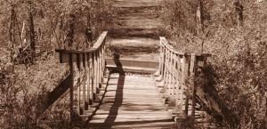 featured-img-bridge