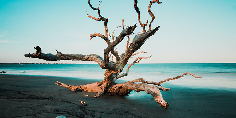 branch of tree in foreground on beach
